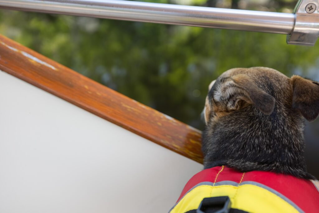 Boat Dogs on America's Great Loop